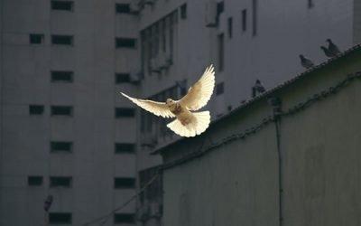 Verdensdag for fred:  Omsorgens kultur som en vej til fred